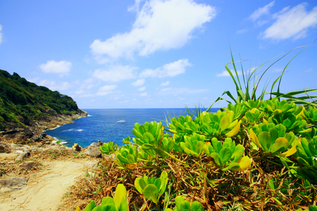 subtropical plants: Blue sky and ocean sea subtropical plants of Thailand Stock Photo