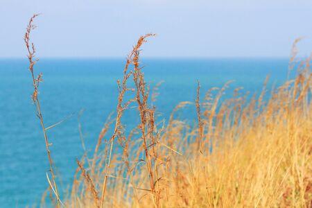 waterless: grass in wind on blue sea background