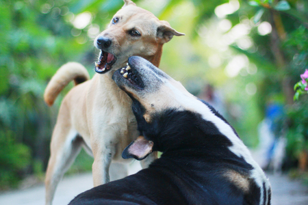 perros jugando: Dos perros jugando Foto de archivo