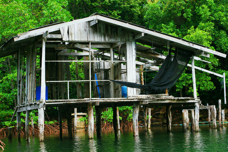 abandoned house: abandoned house in mangrove forest,Thailand