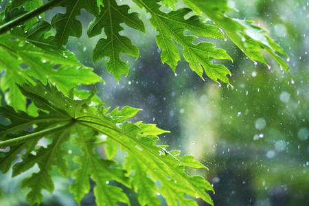 Rain in the spring forest