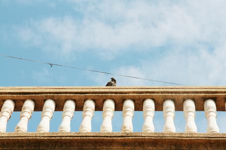 balustrade: balustrade with bird on pillar on sky background