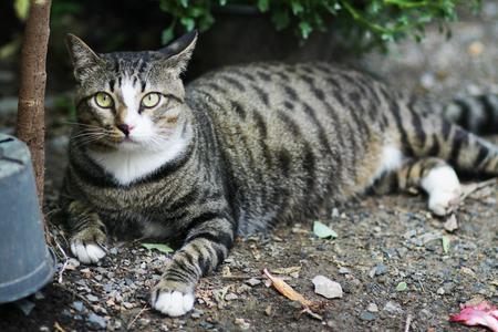 gray cat: gray cat in garden