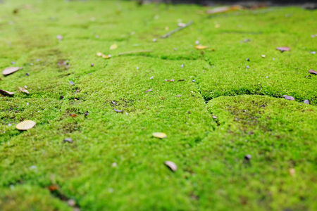 Beautiful background green background of moss forest