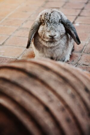 Cute grey rabbit bunny on concrete floor.