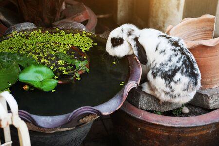 Cute White rabbit bunny on concrete floor.