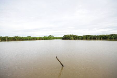 Landscape of riverside Stump and mangrove forest in the river at countryside in Thailand