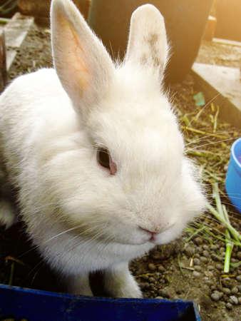 Cute Rabbits bunny in the garden farm. 免版税图像