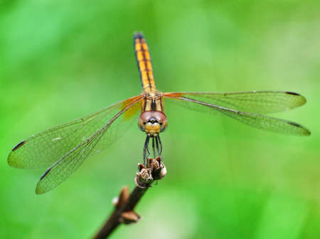 dragonfly in green background photo