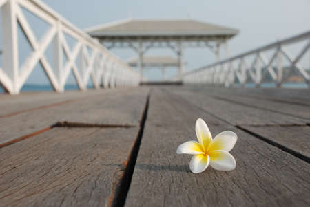 Desert rose on the bridge to open sea Stock Photo