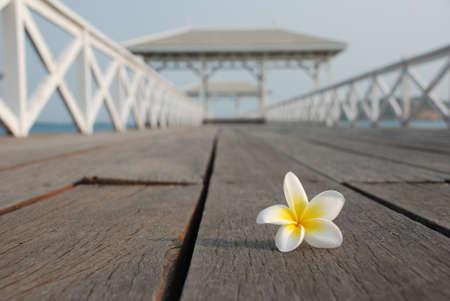 guardrail: Desert rose on the bridge to open sea Stock Photo