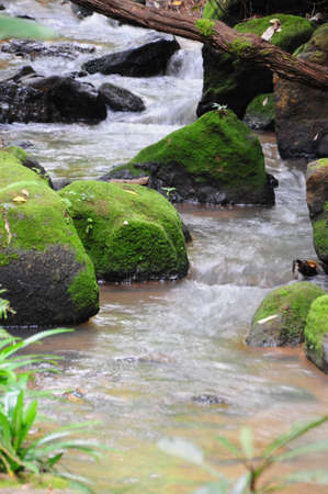 creek in tropical forest. photo