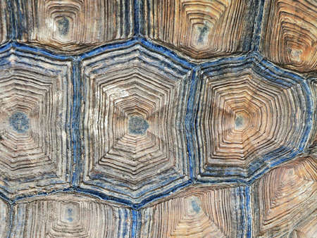Close up view of the hexagonal texture of a turtle shell.