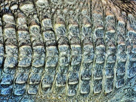 gator: Crocodile skin texture Stock Photo
