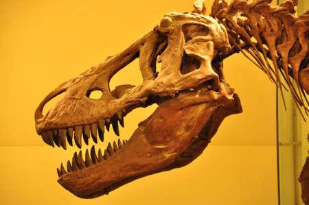 Tyrannosaurus Rex skeleton  Editorial