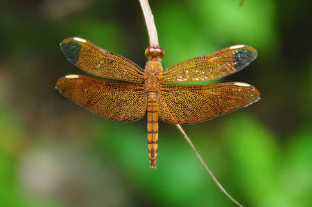 A close up shot of a dragon fly