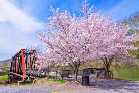 Cherry Blossom and old bridge Stock Photo