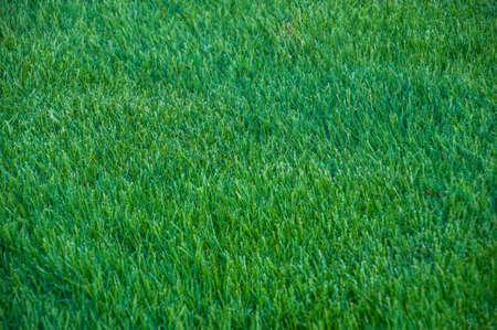 배경 녹색 잔디 텍스처