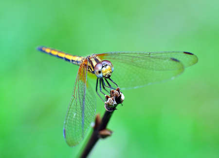 close up of dragon fly Stock Photo