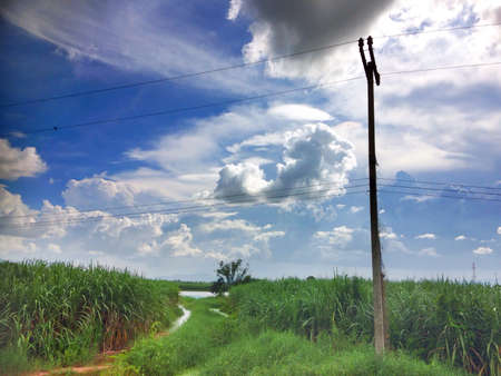 Rural road with telegraph pole