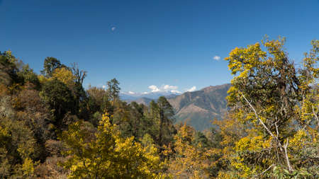 Mountains and forest. Kingdom of Bhutan. Asia