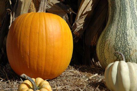 Halloween Mix Banco de Imagens
