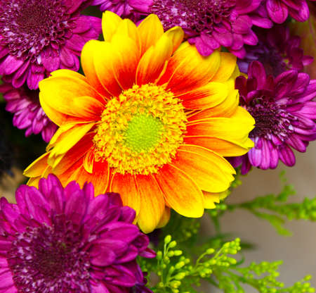Sunburst colored flower surrounded by purple carnations photo