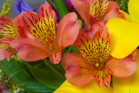 Bright colored flowers Stock Photo - 10293641