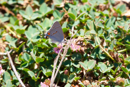 ground cover: grey butterfly on flowered ground cover Stock Photo