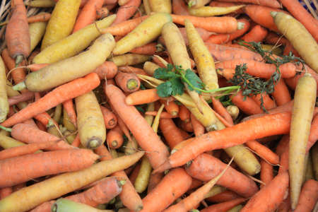 capitalism: Carrots after picking in various colors and variety