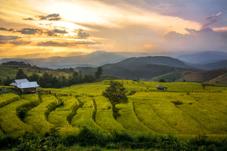 filed: Rice field terrace with sunset scene Stock Photo
