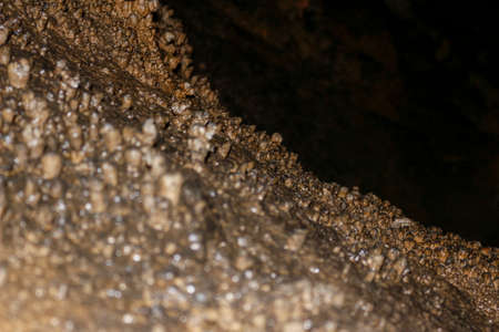 a beautiful view of Carbonate concretes in the recently opened Corchia cave in tuscany