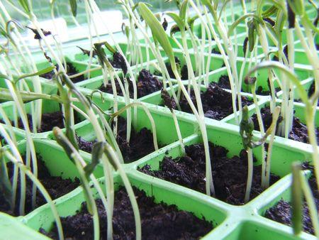 Seedlings growing 5 Stock Photo - 852051