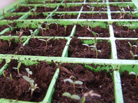 Seedling Growing Stock Photo - 854167