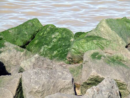 Sea break large rocks with green slime Stock Photo