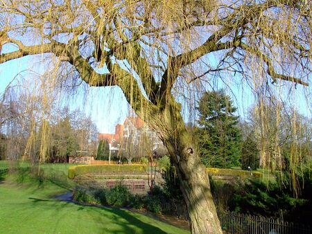 a willow tree in the park
