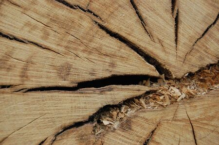 a close up shot of the texture and detail of a tree trunks inside                           photo