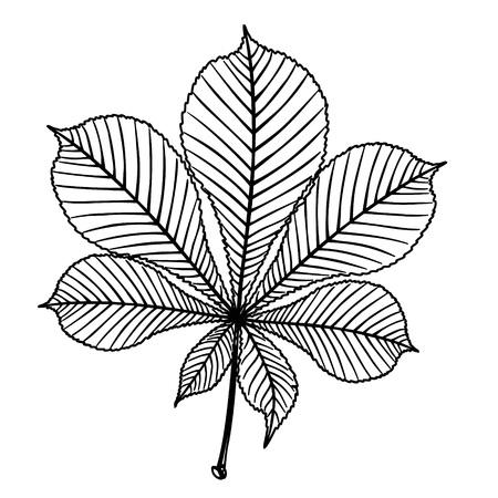 Chestnut detailed leaf. Outline illustration of chestnut tree detailed leaf black vector illustration for print or web design.
