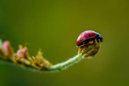 Ladybug on the lookout