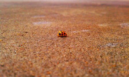 lady bug buiten