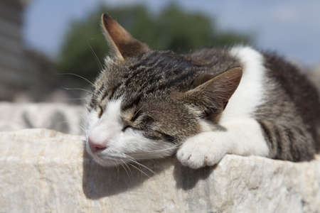 Cute cat resting on wall  Horizontal shot