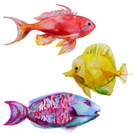 yellow tang: set with hand drawn watercolor tropical fish