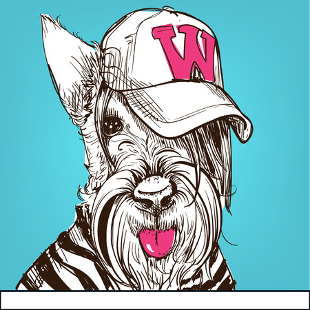terrier: Cute portrait of a Scottish Terrier wearing a cap. Vector illustration.