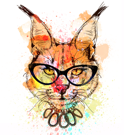 bobcat: bobcat fashion colorful character portrait with glasses Stock Photo