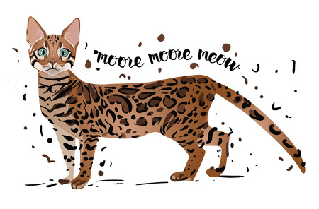 bengal: spotted pedigreed  colorful cute cat - vector illustration