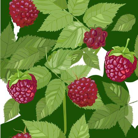 raspberries: raspberries seamless summer colorful pattern. vector illustration