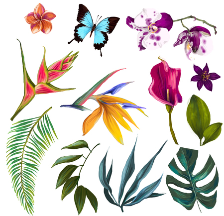 exotic flowers: set with exotic flowers