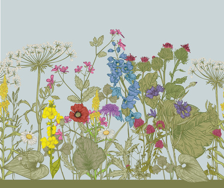 botanical illustration: Vector seamless floral border. Herbs and wild flowers. Botanical Illustration engraving style.