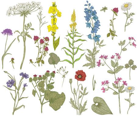 Vector floral collection. Herbes et fleurs sauvages. Banque d'images - 68892327