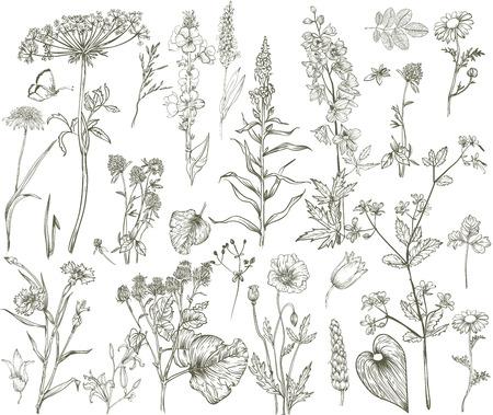 Vector bloemen collectie. Kruiden en wilde bloemen.